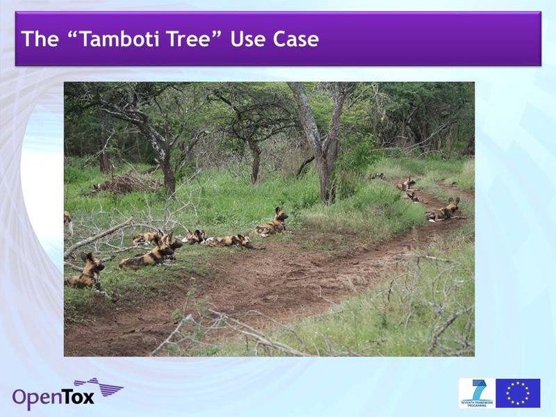 Barry Hardy OpenTox SYN SAM IQPC 110224 1.4 wild dogs 1