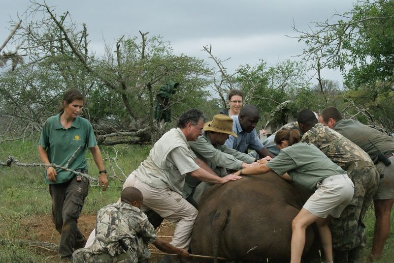 Thanda White Rhino Tragedy 101209 9